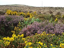 Connemara Nature