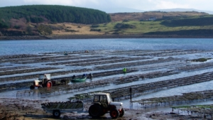 oyster-farm-and-oyster-tasting-tour-letterfrack-connemara-galway-G2