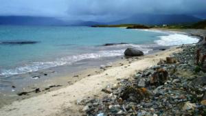 seaweed foraging and ecology walk renvyle connemara galway