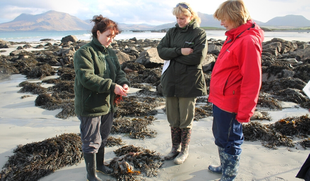 seaweed foraging and ecology walk renvyle connemara