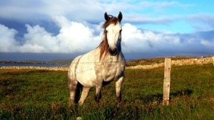 guided-beach-horse-riding-excursion-wild-atlantic-way-G1